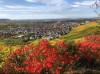 Stadtteil Beutelsbach Ansicht von oben mit Weinberghängen